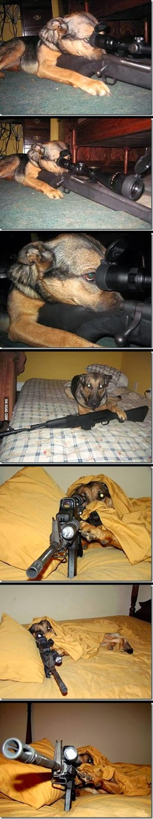Taking Guard Dog to a Whole New Level!