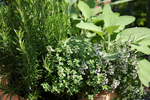 Garden or Container Herbs