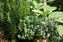 Garden or Container Herbs