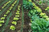 Horta orgânica como fazer