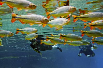 Flutuação em águas transparentes de Bonito