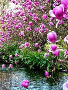 Life, In All Its Beautiful Forms - الحياة ، بكل أشكال جميلة