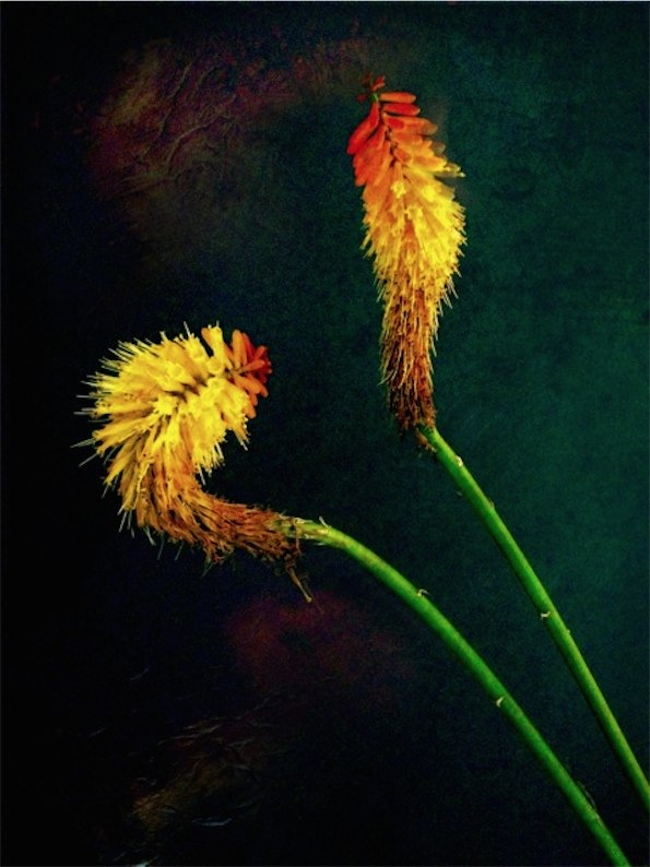 Flower - Still Life © Paul Toussaint
