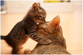 memelihara-kucing-04