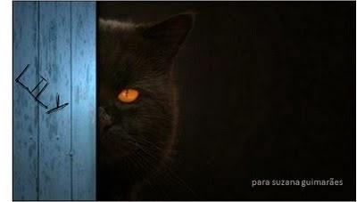 Negro gato