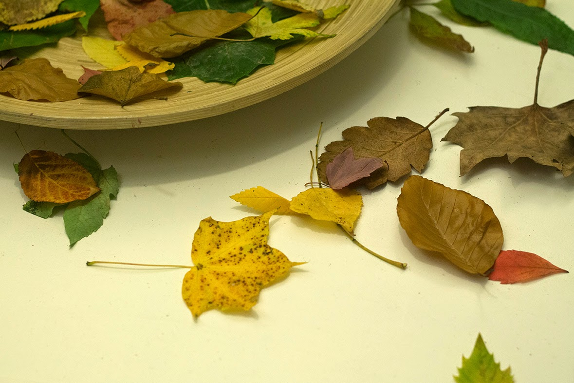 plate of Autumn leaves
