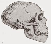 Tengkorak manusia Neander