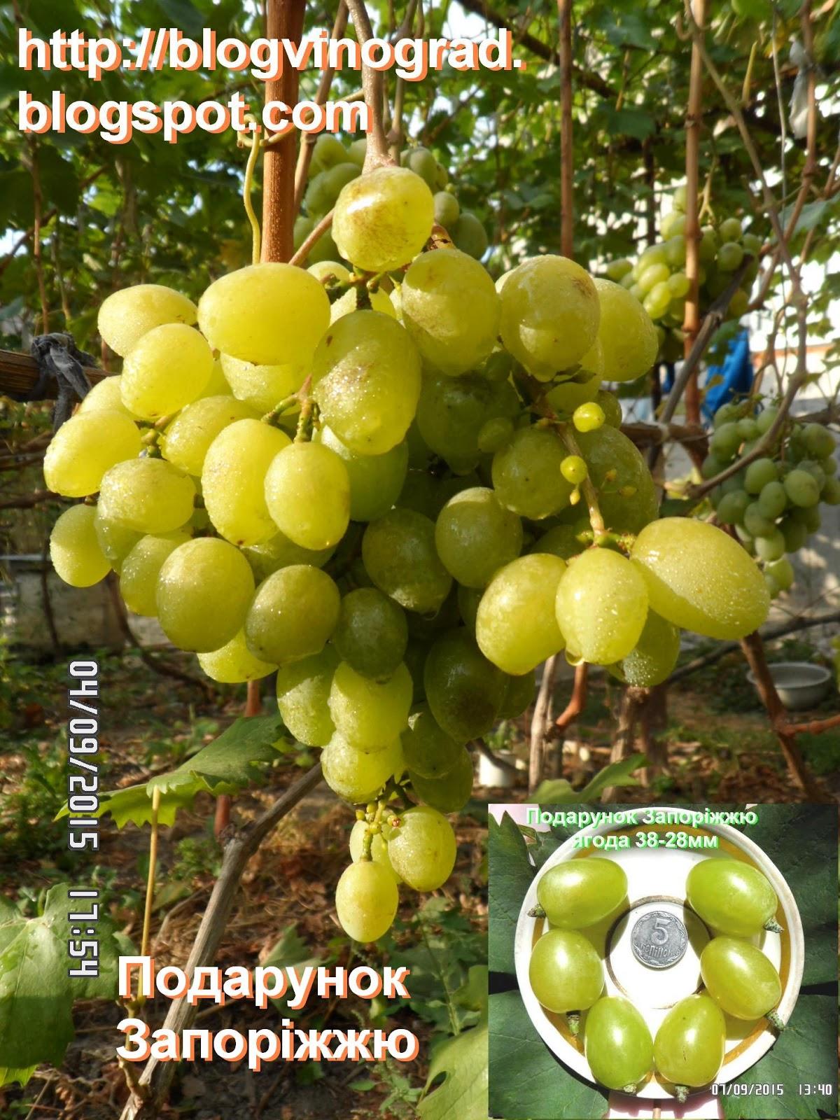Виноград сорта с фото и описанием подарок запорожью новый