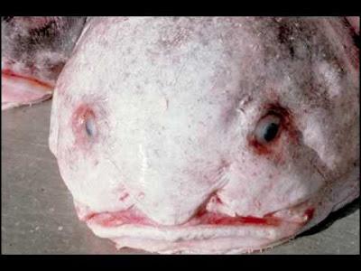 blob-fish