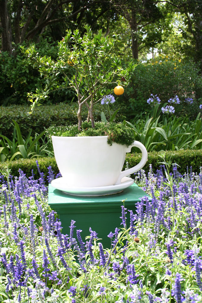 The Rainforest Garden: 10 Container Gardening Ideas