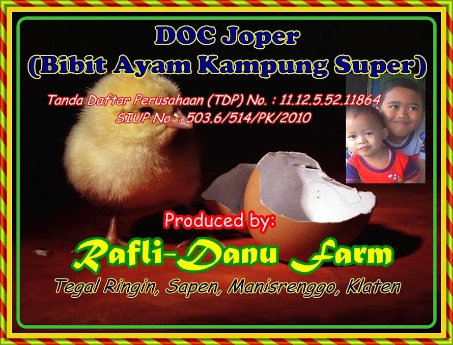 Ayam Kampung Super / Ayam Jawa Super dan bibit ayam (DOC) dari CV. Rafli & Danu's Farm.