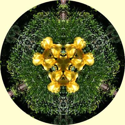 Mandala dekoracyjna, irysy