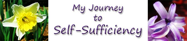 My Journey to Self-Sufficiency
