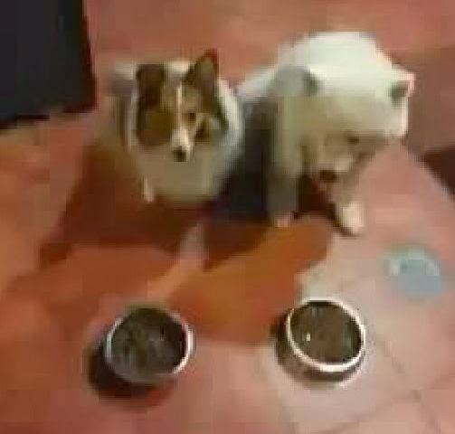 dogs pray before eating