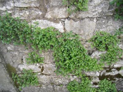 La ruota delle stagioni a selz e dintorni piante sui - Piante per coprire muri ...