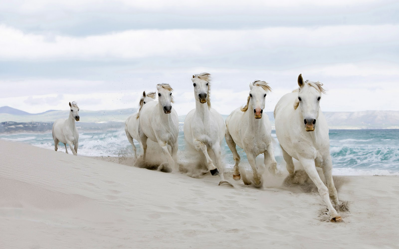 Best   Wallpaper Horse Beach - MixoPlanet+%288%29  You Should Have_696411.jpg