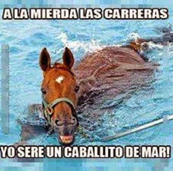 Quiero ser un caballo de Mar