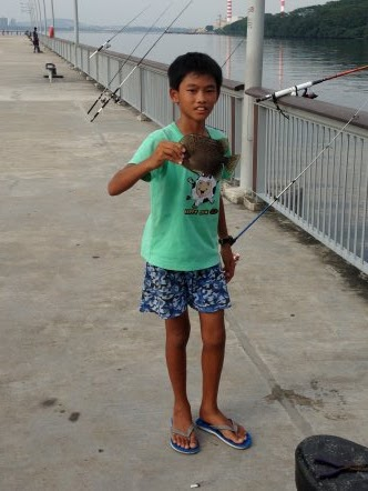Scat or Kim Kor 金鼓, 金錢魚 weighing about 500gm Caught by Lesper Loo at Woodland Jetty