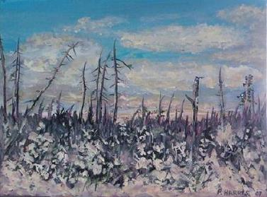Algoma Snow (2007)    Price: $225