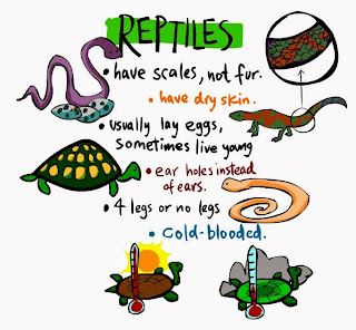 http://www.sheppardsoftware.com/content/animals/kidscorner/classification/kc_classification_reptiles.htm