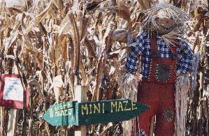 Corn Maze in Durham, NC
