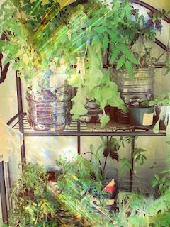 Ideias geniais para preparar a sua horta em casa!