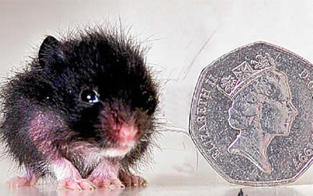 Smallest Animals On Earth