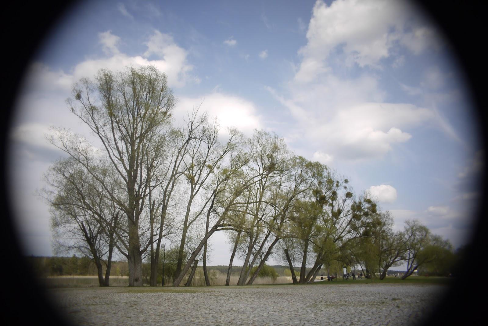 Cosmicar 12.5/1.9 @1.9 - landscape (2:3 crop).