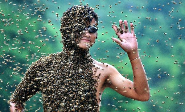 verdens største bi