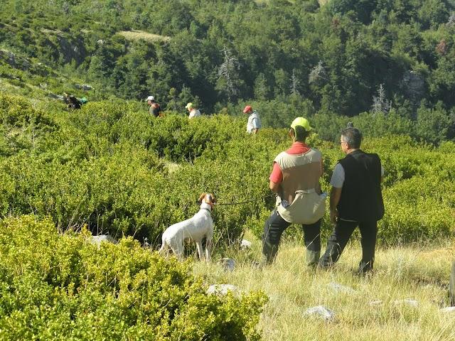 Αποτελέσματα  Πρακτικού Κυνηγίου CACT σε ορεινή πέρδικα στoν Όλυμπο  30-31 Αυγούστου 2014.