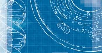 New prog releases deafening opera blueprint ferry corsten blueprint new prog releases deafening opera blueprint malvernweather Gallery
