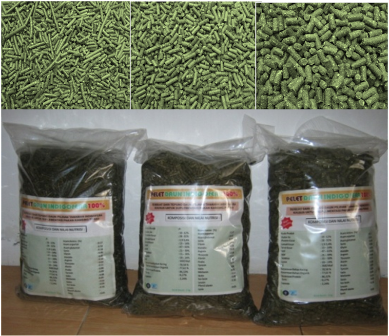 Pellet Indigofera (Complete Feed Pengganti Konsentrat)