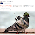 VIDEO & PICS: Pigeon Suspected Of Being Pakistani SPY 'Arrested' In India
