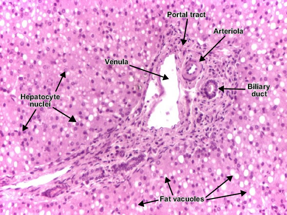 � ���� ��� � �� ���� pathology cell