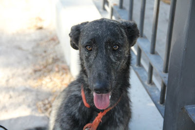 Bruma Villa Asoka EDUCAN Alicante Adiestramiento canino a domicilio