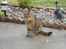 Wildcat ♥ RIP
