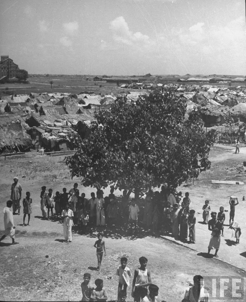 men & children gathered under the shade of a banyan tree