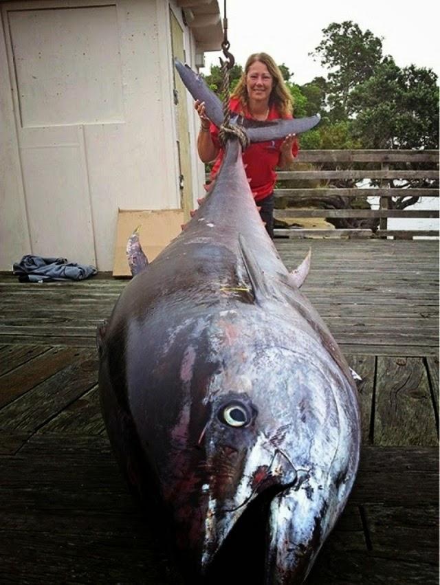Hebat !.. Wanita Ini Berjaya Pancing Ikan Tuna Gergasi Seberat 411 Kg