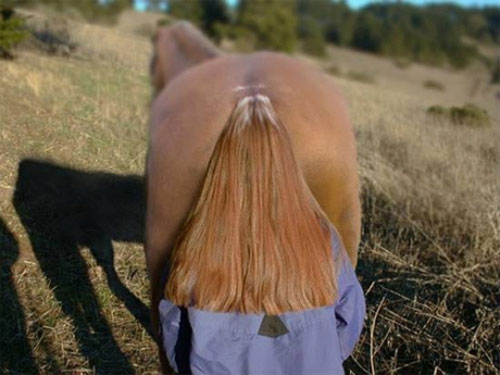 Perfectly timed photo horse hair