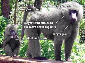 external image baboon+future.jpg