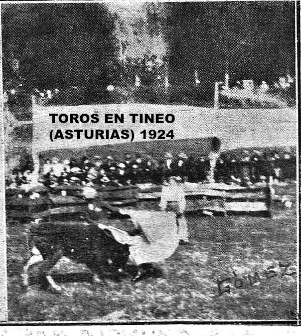 TINEO TOROS