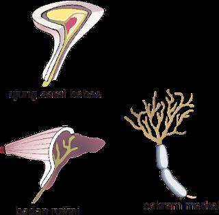 Gambar Ujung Sel saraf