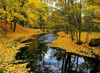 Fondo de Arroyo del bosque en otoño
