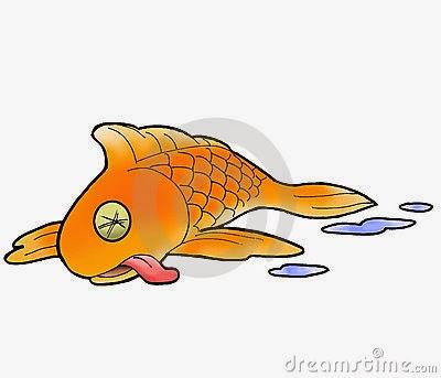 Enigmas dos aqu rios a gua doce algumas coisas que for How to euthanize a fish