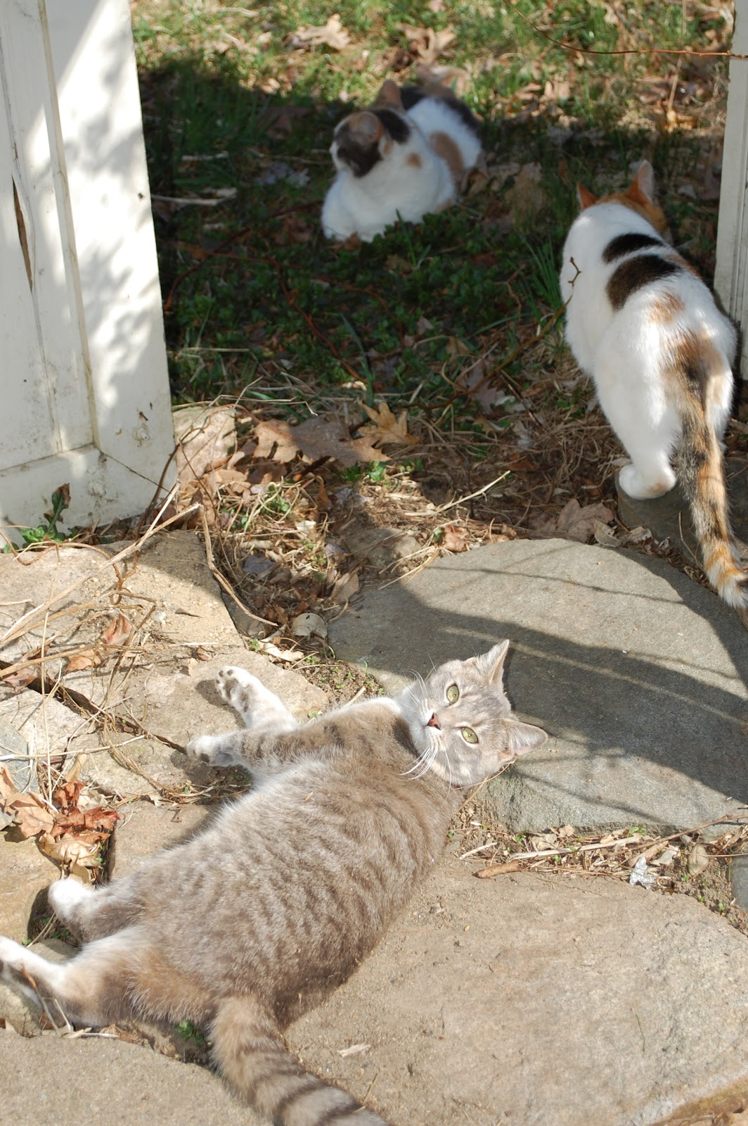 How To Keep Cats Out Of Mulch