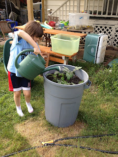 Child watering potatoes growing in a trash can