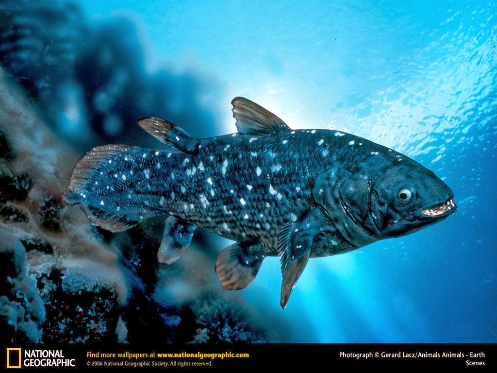 Ikan Coelacanth