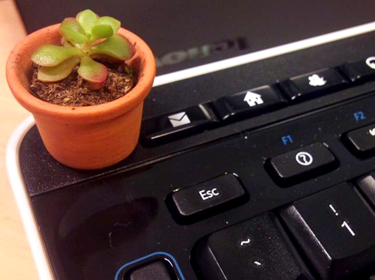 Miniature succulent in a pot on top of a computer keyboard.