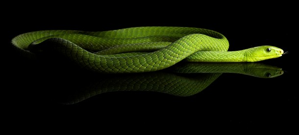Stunning Snake Shots