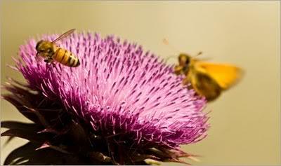 Lebah dan Kupu-Kupu Hewan Parameter Cuaca